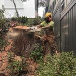 arborist cutting a big tree in a residential backyard