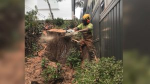 arborist cutting a big tree in a residential backyard