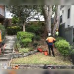 arborists assessing the situation prior to removal of large tree