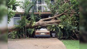 storm damaged tree fallen on car in driveway