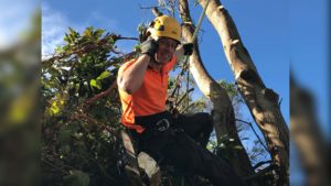 Jonnie from Wolf Trees & Gardens up tree with chainsaw