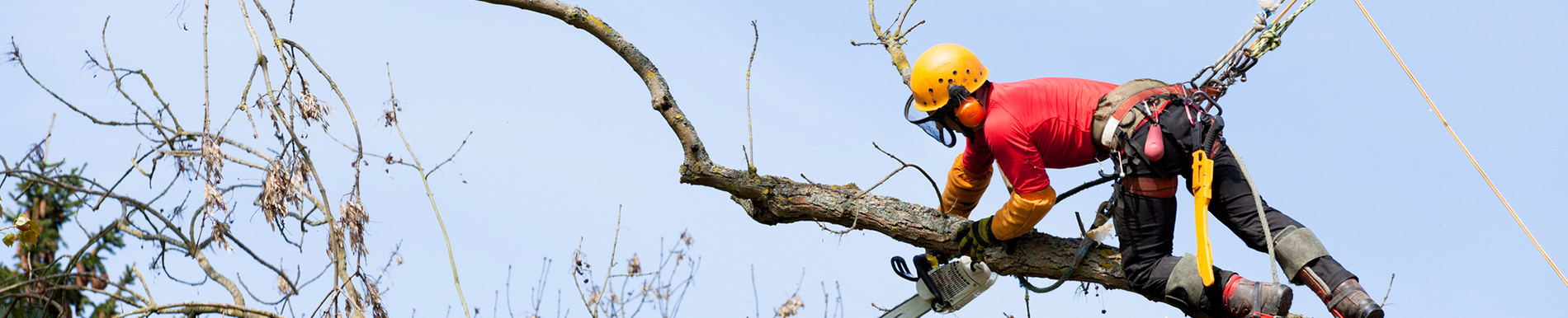 Worker using chainsaw to remove tree branch in Randwick